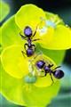 Ant-i-social, 4 o'clock, my garden
