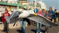 A Seagull In Brighton