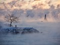 Sea Smoke at Fifteen Below