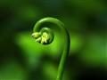 Green spiral.