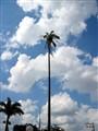 sky is limit