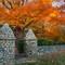 Cemetery Tree (1 of 1)