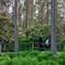 Rhodo Park 2