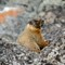 marmot12013
