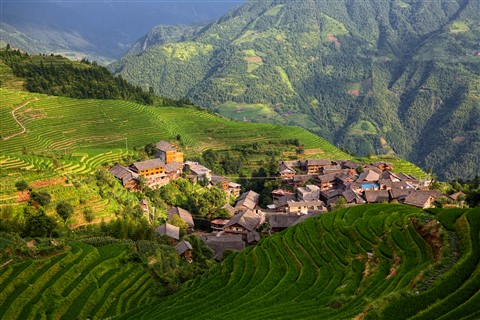 Rice Terrace Two
