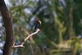 Nature's colour palette-White throated-