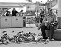 pigeons feeder