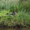 Knowsley Safari Park 20120505 0093