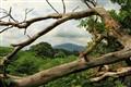LA 080 Wales Dead Tree