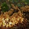 mushrooms3