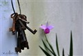 keys & orchid