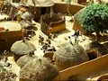 Village somewhere between Kano and Zaria, Nigeria