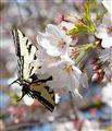 Spring in Scaramento