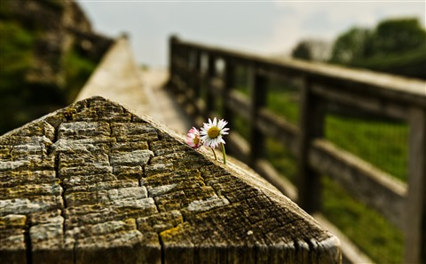 Bridge_Flower
