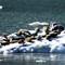 2013 Alaska cruise - SX50