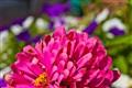 Pink Flower - Carmel, CA