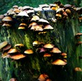 Mushrooms, a colony