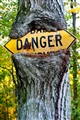 danger in a tree