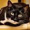BOOTS CAT Challenge_4080403-