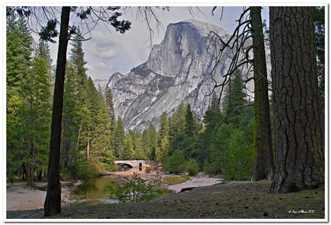 Half Dome From the Forest_tn