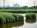 Great Egret and the Manhattan Skyline