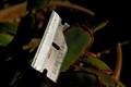 razor blade & succulent