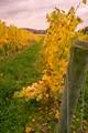 winery2_7x5