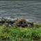 Hudson River NY
