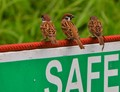 Safe Sparrows
