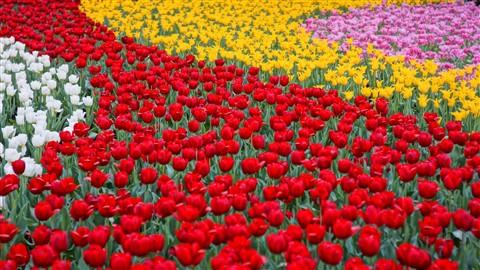 HK Flower Show