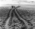 Turtle Tracks 2