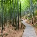 Mountain Path through Bamboo Grove PA181877  dp-mtn-path
