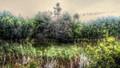 Forrest pond Gotland, Sweden