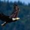 Eagle Fight 3