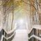 foggy boardwalk