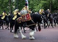 """On """"The Mall"""" in London making their way to the """"Trooping of the Colour""""."""
