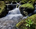 Stream with moss