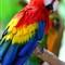 2013-08-15 - Jurong Bird Park-3268