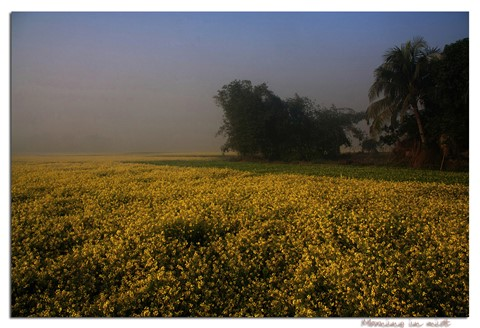 BijanBangladesh00051a