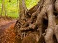 heverlee roots