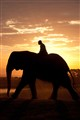 African Elephant Sunrise Ride