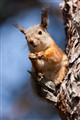 squirrel at spring