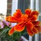 Windowbox Flower 2