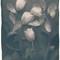 Tulips02_Toned_750