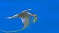Taste of Tern
