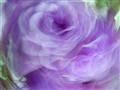 sflowers053