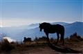 Alpujarra Horse