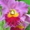 floral_28
