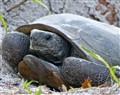 Finally Shot a Gopher Tortoise