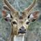 Dpreview  Deer